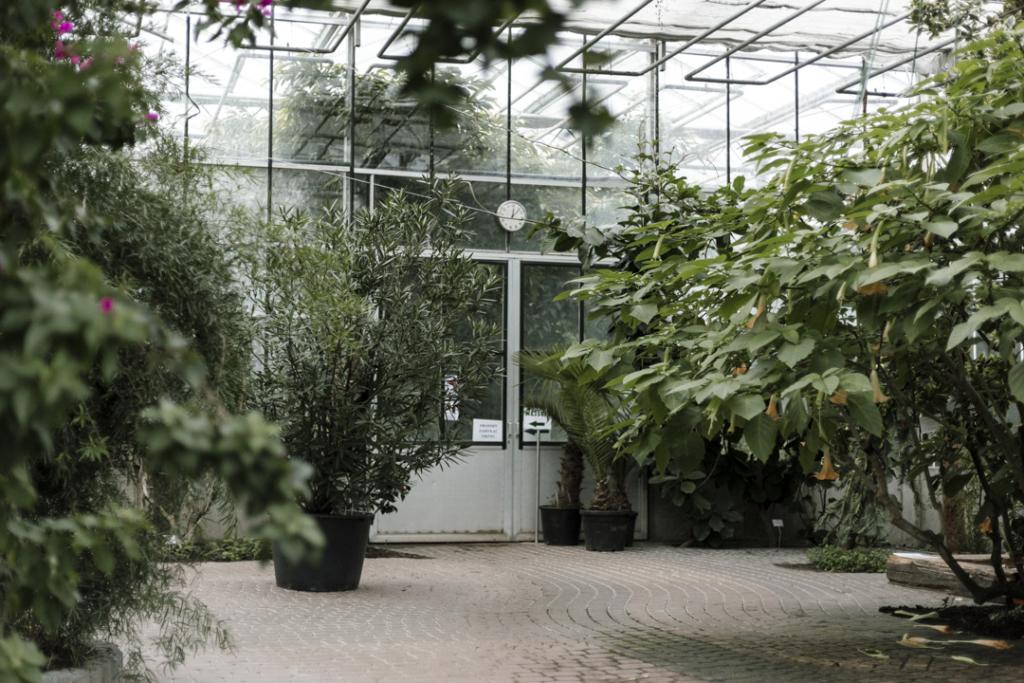 Ogród botaniczny - fotorelacja. Foto Justyna Grochowska